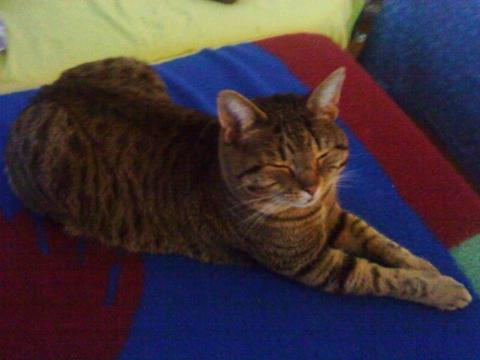ab wann darf man einen kater kastrieren gesundheit tiere katzen. Black Bedroom Furniture Sets. Home Design Ideas