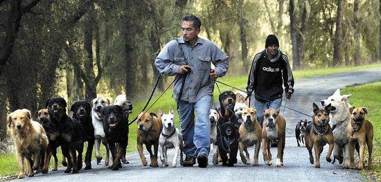 Cesar Millan Dog Training Center