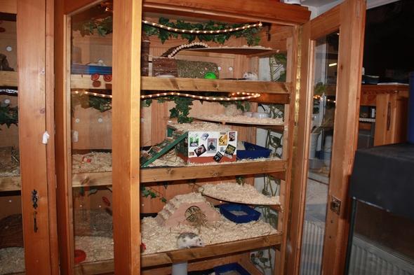 igel hallten geht das haltung tiere afrikanische. Black Bedroom Furniture Sets. Home Design Ideas