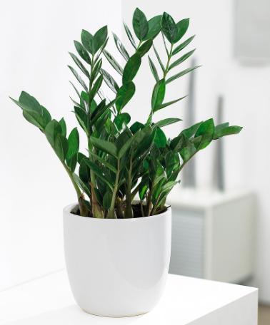 Welche zimmerpflanzen k nnen auch an relativ dunklen for Welche zimmerpflanzen