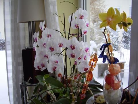 meine orchideen bekommen gelbe bl tter was tun blumen garten. Black Bedroom Furniture Sets. Home Design Ideas