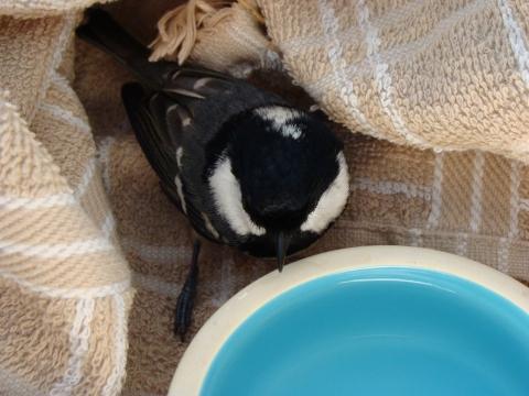 vogel gegen scheibe geflogen verletzt was nun verletzt tiere. Black Bedroom Furniture Sets. Home Design Ideas