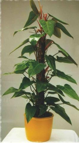 welche zimmerpflanzen geben sich mit einem platz im. Black Bedroom Furniture Sets. Home Design Ideas