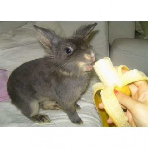d rfen kaninchen bananen fressen futter banane. Black Bedroom Furniture Sets. Home Design Ideas