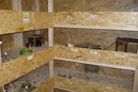 wie viel grad plus und wie viel minus halten meerscweinchen drau en aus darf man sie drau en. Black Bedroom Furniture Sets. Home Design Ideas