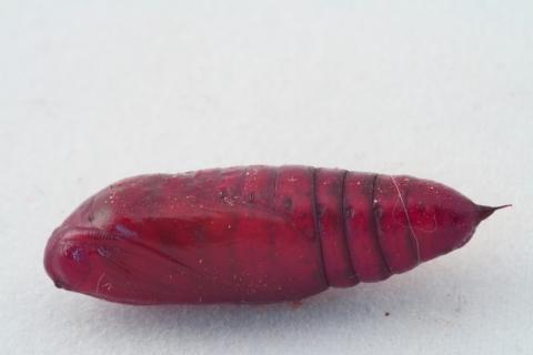 Rote larven in blumenenerde was ist das pflanzen for Trauerfliegen larven