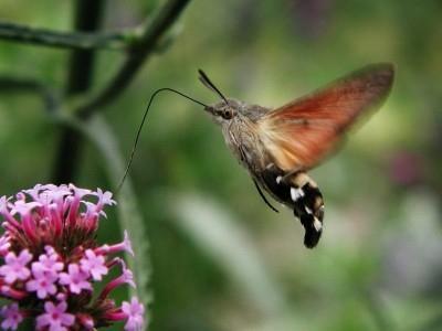 seltsames fliegendes insekt. Black Bedroom Furniture Sets. Home Design Ideas