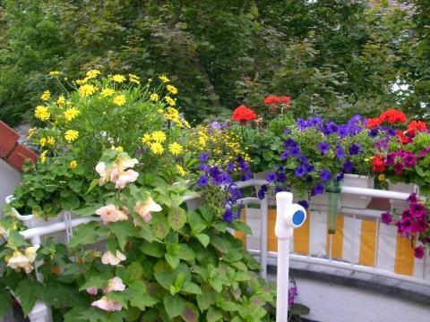 welche balkonpflanzen eignen sich f r die westseite pflanzen. Black Bedroom Furniture Sets. Home Design Ideas
