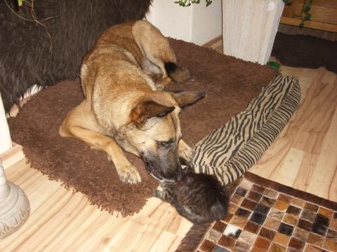 warum hassen hunde katzen. Black Bedroom Furniture Sets. Home Design Ideas