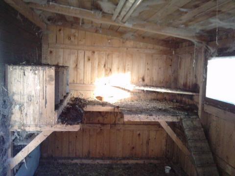 h hner koten eigenes nest voll tierhaltung tiere. Black Bedroom Furniture Sets. Home Design Ideas