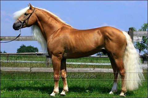 Exterieur beurteilung pferde reiten for Exterieur beurteilung pferd