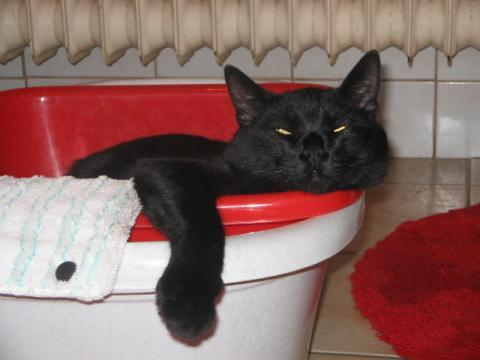 kater sch ft den ganzen tag nur noch katzen schlaf. Black Bedroom Furniture Sets. Home Design Ideas