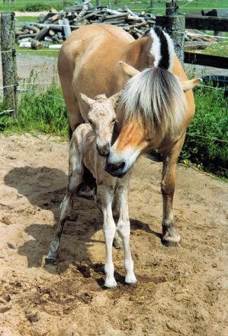 frage jemand pferd verschenken