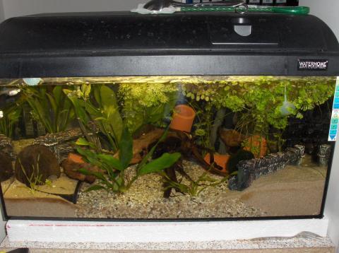 wie kann ich mein aquarium retten fische guppys. Black Bedroom Furniture Sets. Home Design Ideas