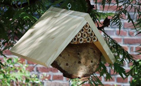 bienennest im vogelhaus im garten spricht etwas f r die entfernung des nests. Black Bedroom Furniture Sets. Home Design Ideas