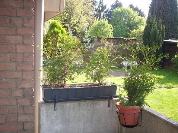 pflanzensichtschutz f r balkon gesucht garten. Black Bedroom Furniture Sets. Home Design Ideas
