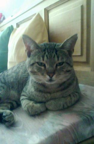 kater frisst nicht wirklich und ist mager katzenfutter katzen untergewicht. Black Bedroom Furniture Sets. Home Design Ideas