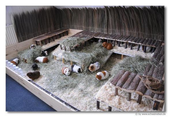 meerschweinchen im terrarium halten oder in so einem gitterk fig tiere haustiere nager. Black Bedroom Furniture Sets. Home Design Ideas