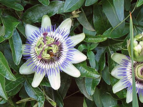 Welche zimmerpflanzen f r 39 s fensterbrett k nnt ihr mir for Welche zimmerpflanzen