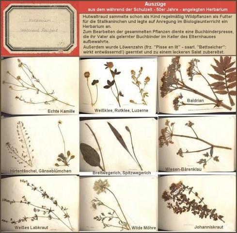 Herbarium kindheit 50er jahre