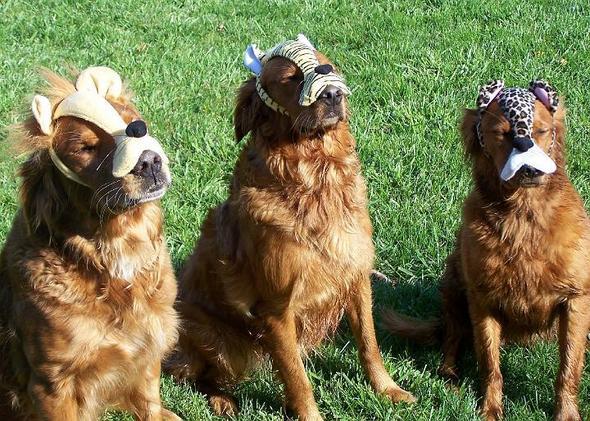 Warum Hunde keine Daumen haben