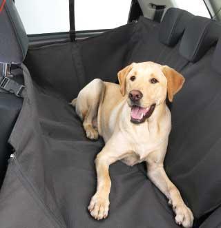 m chten einen hund limousine aber vielleicht zu klein auto hunde transport. Black Bedroom Furniture Sets. Home Design Ideas