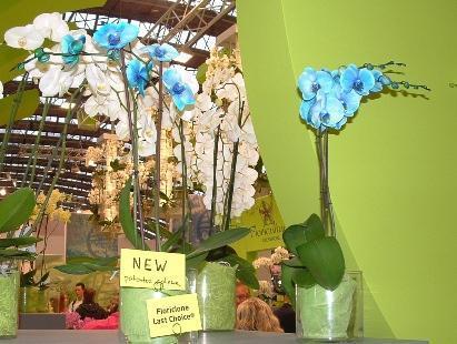 wie am besten eine wei e blume blau f rben pflanzen. Black Bedroom Furniture Sets. Home Design Ideas