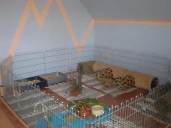 wie halte ich meine kaninchen am besten tiere sauberkeit wohnung. Black Bedroom Furniture Sets. Home Design Ideas