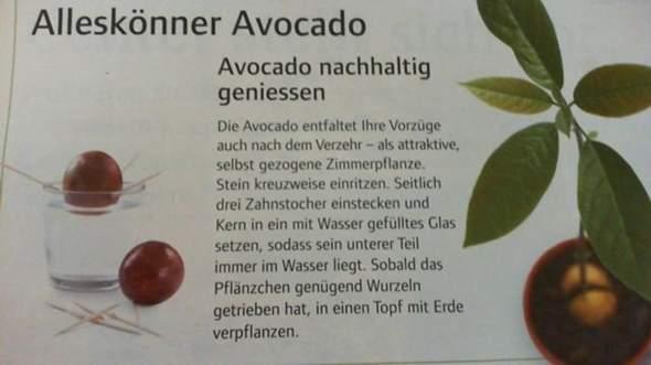 avocadokern setzt keine wurzel schleim und schimmelbildung pflanzen schimmel botanik. Black Bedroom Furniture Sets. Home Design Ideas