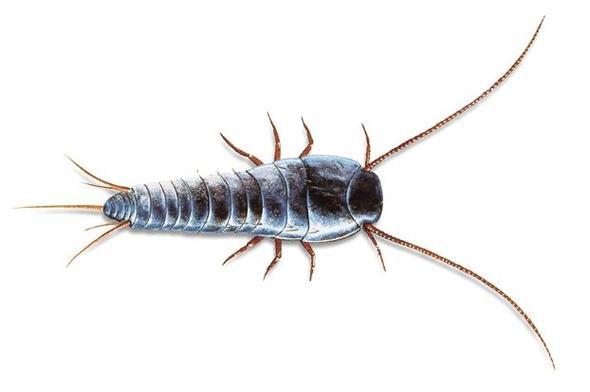 komisches insekt im pool gefunden tiere insekten. Black Bedroom Furniture Sets. Home Design Ideas