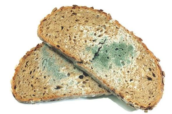 brot schimmel essen toast sandwich. Black Bedroom Furniture Sets. Home Design Ideas