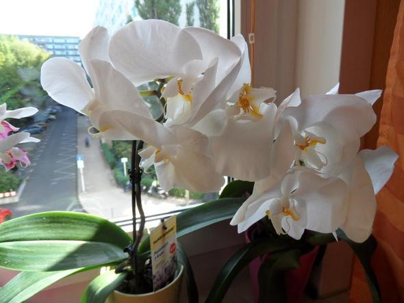 wann muss ich eine orchidee schneiden pflanzen g rtnerei pflanzenpflege. Black Bedroom Furniture Sets. Home Design Ideas