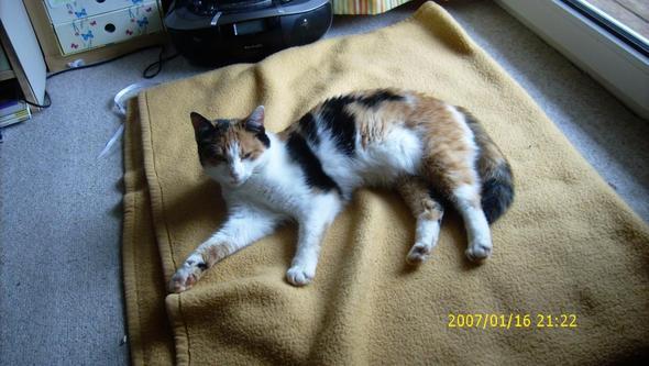 guter schlafplatz f r eine katze haustier kater katzen. Black Bedroom Furniture Sets. Home Design Ideas