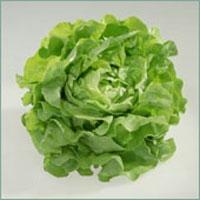 d rfen landschildkr ten salat essen schildkroeten tiere. Black Bedroom Furniture Sets. Home Design Ideas