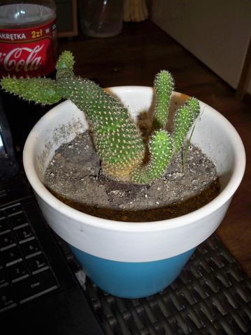 mein kaktus w chst nicht nach oben ist das normal pflanze pflanzen pflege pflanzen. Black Bedroom Furniture Sets. Home Design Ideas