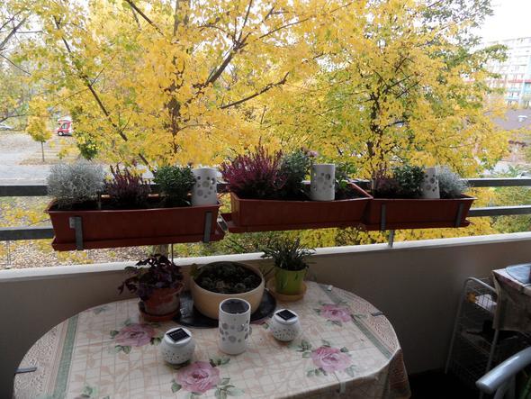 immergr ner balkonkasten pflanzen botanik balkon. Black Bedroom Furniture Sets. Home Design Ideas