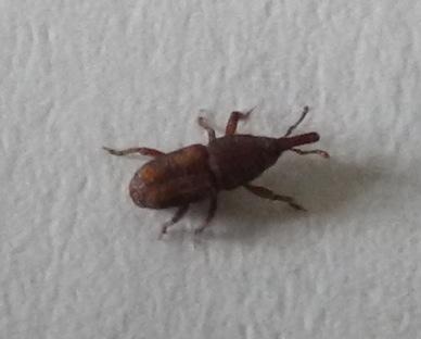 was ist das f r ein tier insekt k fer insekten tiere sch dlinge. Black Bedroom Furniture Sets. Home Design Ideas
