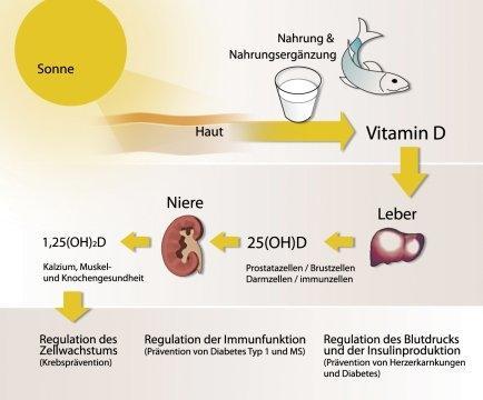 welche nat rlichen mittel bzw lebensmittel helfen gegen vitamin d mangel gesundheit. Black Bedroom Furniture Sets. Home Design Ideas