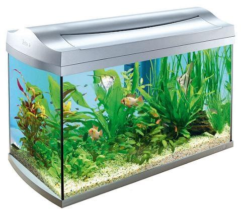 60 liter aquariumbesatz fische aquaristik aquarium. Black Bedroom Furniture Sets. Home Design Ideas