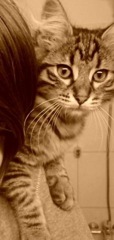 ab wann darf ich meine katze nach der kastration baden katzen katzen baden. Black Bedroom Furniture Sets. Home Design Ideas