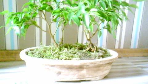 bonsaischale ohen loch unten schale bonsai. Black Bedroom Furniture Sets. Home Design Ideas