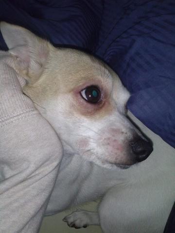 hat mein hund ne allergie tiere hunde blase. Black Bedroom Furniture Sets. Home Design Ideas