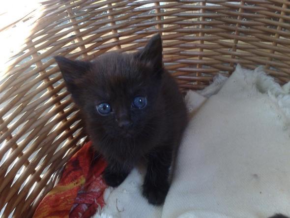 ich suche name f r einen kater namen katzen. Black Bedroom Furniture Sets. Home Design Ideas