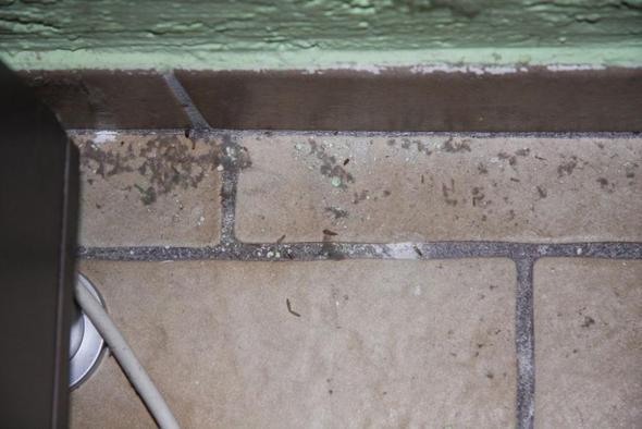 insekten unter m bel bild tiere rechte wohnung. Black Bedroom Furniture Sets. Home Design Ideas