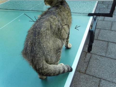 Wo kann ich meine katze im urlaub unterbringen