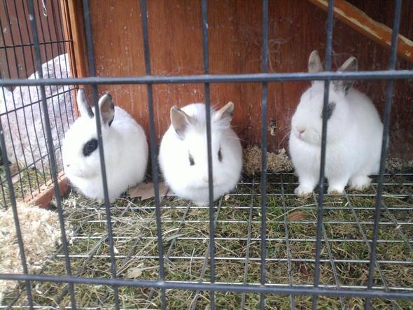 kaninchenstall kan das gitter am boden gef hrlich sein kaninchen tier haustier. Black Bedroom Furniture Sets. Home Design Ideas