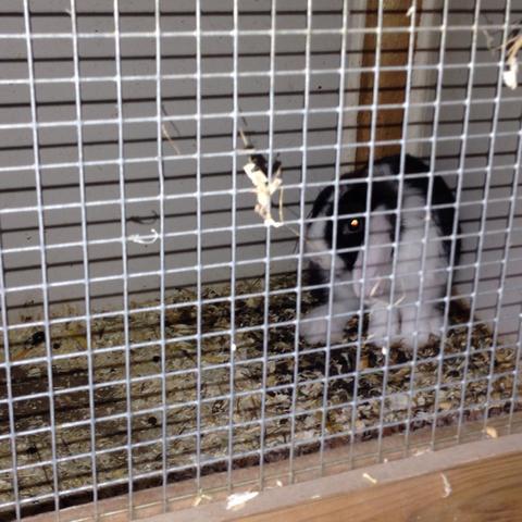 kann man m use zu einem kaninchen setzen k fig alter haustiere. Black Bedroom Furniture Sets. Home Design Ideas
