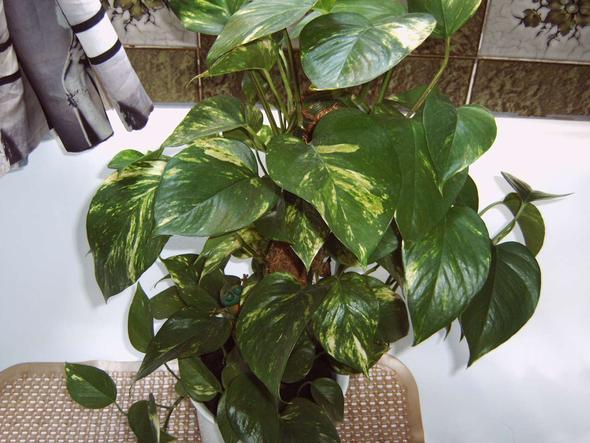pin giftige zimmerpflanzen fuer katzen on pinterest. Black Bedroom Furniture Sets. Home Design Ideas