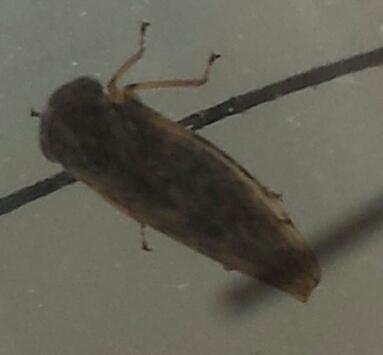 kleine springende tierchen in fenstern he tiere insekten ungeziefer. Black Bedroom Furniture Sets. Home Design Ideas