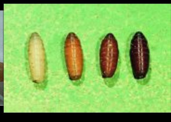 Die Würmer zu des Katers die Symptome